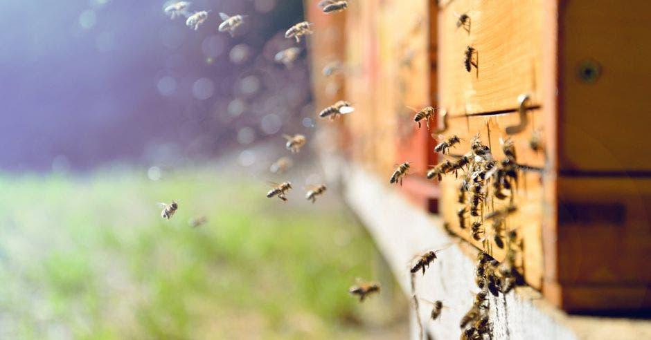 un enjambre de abejas pegado a una casa
