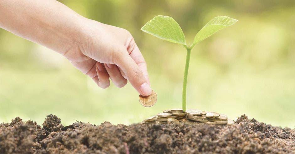 Alguien pone monedas sobre una planta