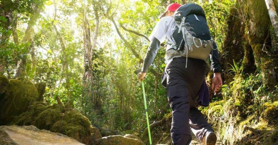 Turista en bosque
