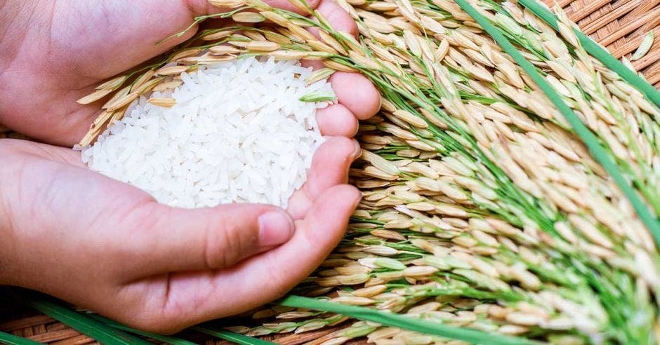 Una persona sostiene arroz entre sus manos