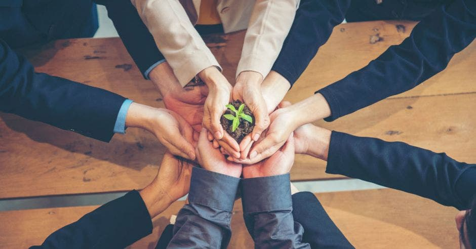 Vemos manos unidas agarrando una plantita