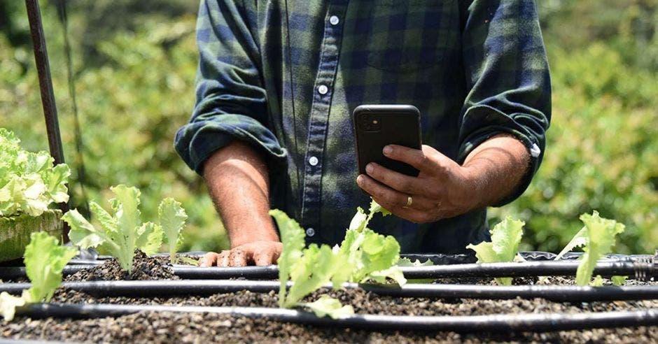 Un hombre apunta su celular hacia una serie de cultivos, al parecer lechugas