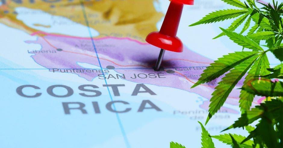 Una planta de marihuana sobre un mapa de Costa Rica