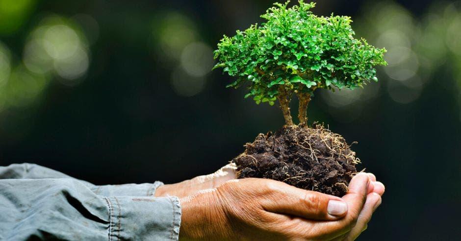 Una persona sostiene un árbol pequeño