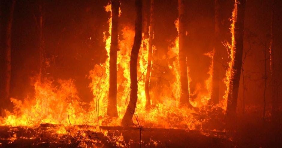 Una serie de árboles quemándose
