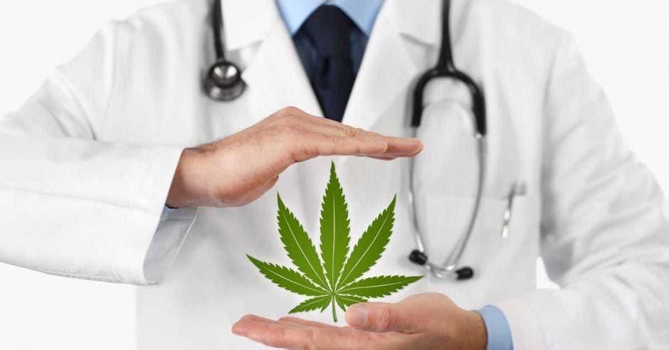 Un hombre sostiene una planta de marihuana