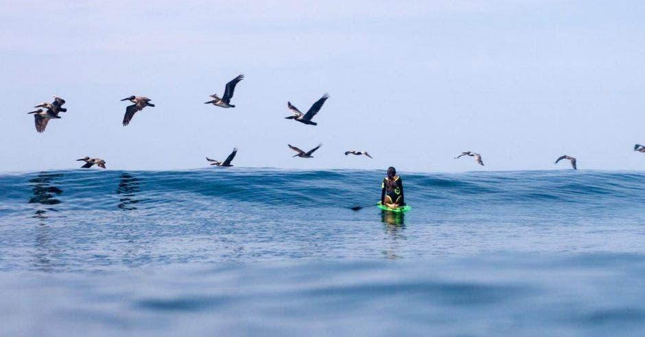 Una mujer flota en su tabla de surf mientras y una decena de pelícanos la sobrevuela