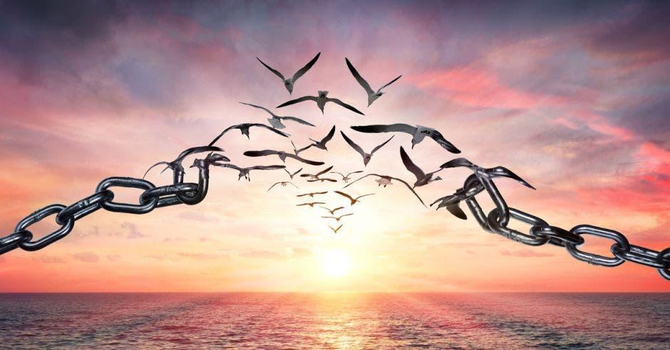 Aves volando liberándose de cadenas