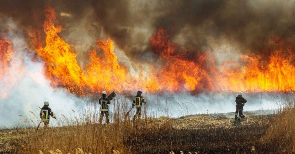 Bomberos luchando por controlar un incendio