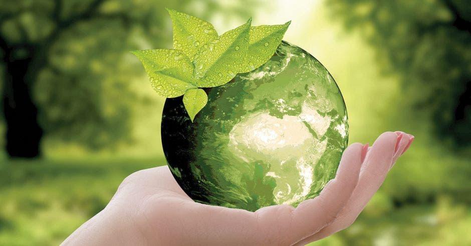 Una mano sosteniendo un mundo verde