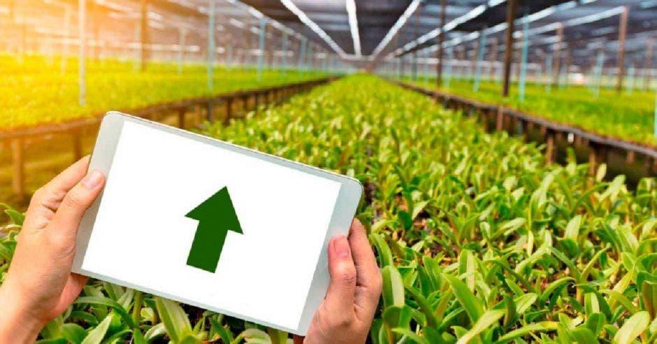 Plantación y persona viendo resultados en tablet
