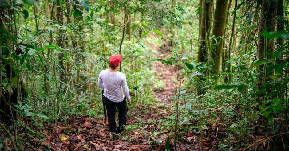 una mujer camina en medio de un bosque