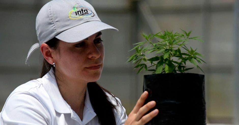 una mujer sostiene una maceta con una planta de cáñamo