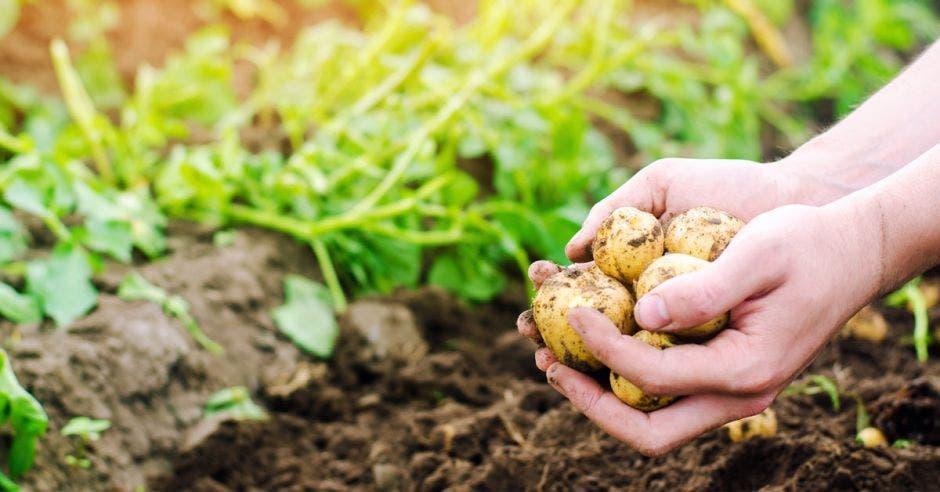 Persona sembrando con tierra en la mano