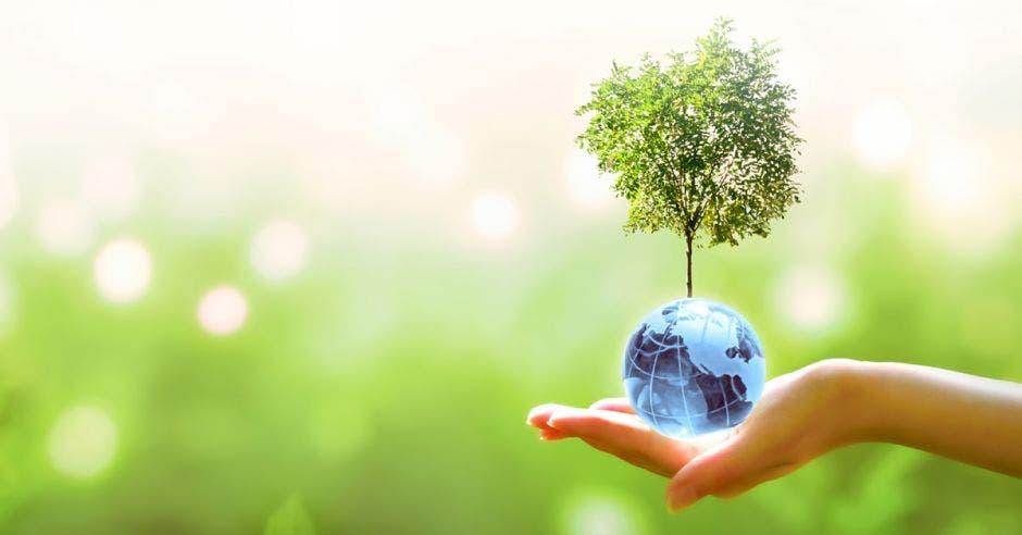 árbol pequeño encima de globo terráqueo sobre una mano