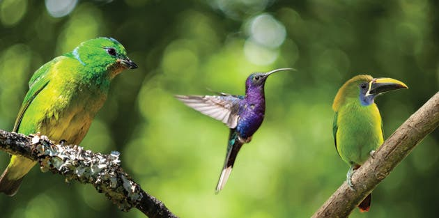 Especies de aves de la zona del cerro La Carpintera