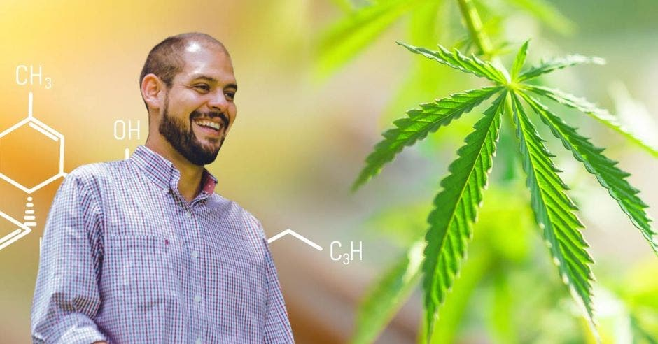 un hombre de barba sonríe junto a un fondo de matas de marihuana