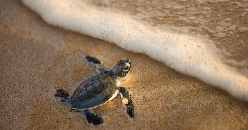 Tortuga en playa