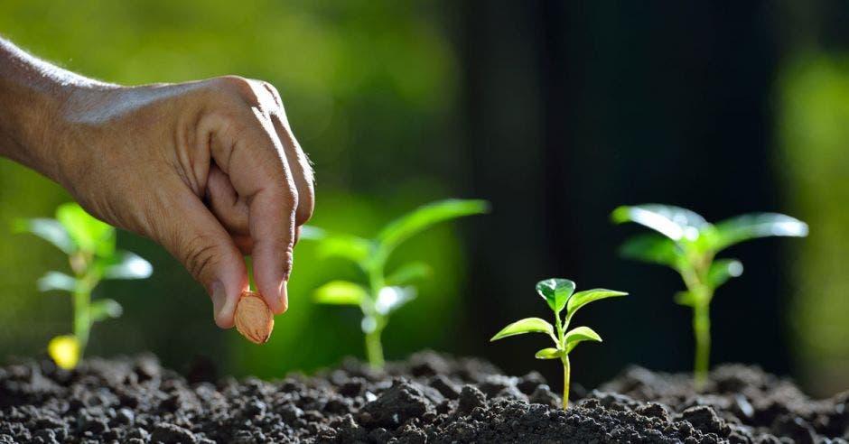 una persona planta una semilla