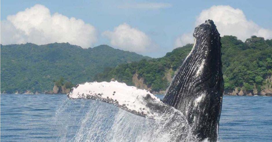 Una ballena saltando sobre el agua