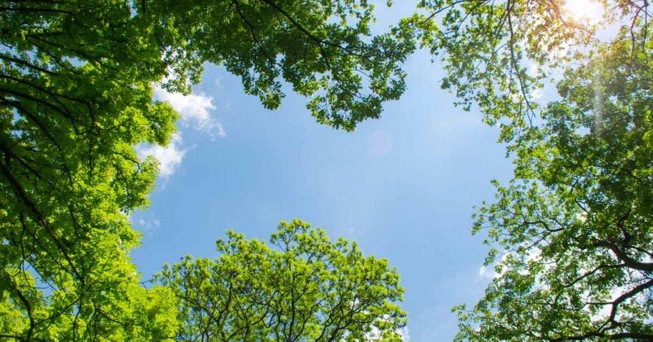 vista desde abajo de la copa de los árboles