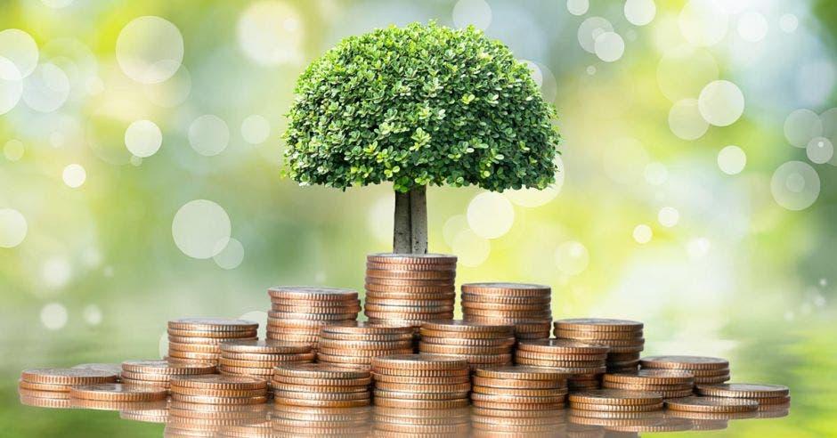 un árbol creciendo en medio de un puño de monedas doradas