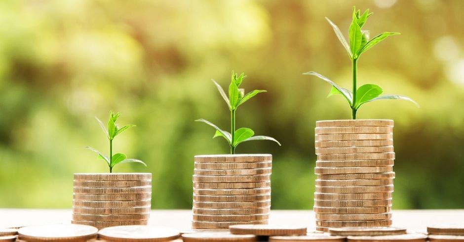 Monedas a las que les crece una mini planta