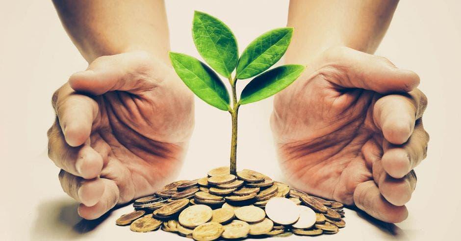 manos alrededor de pequeña planta sobre monedas
