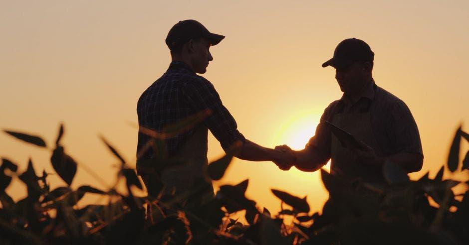 Dos granjeros hablan en el campo, luego dan la mano