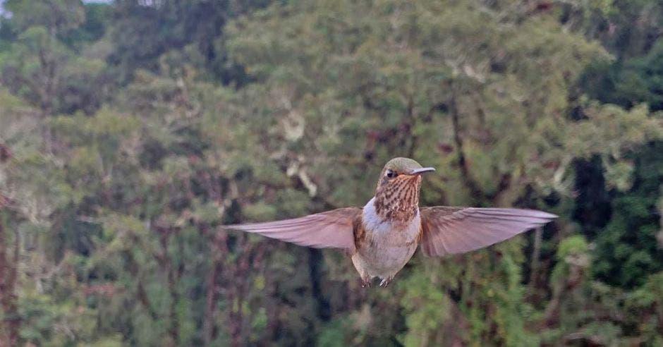 un pájaro vuela entre los árboles