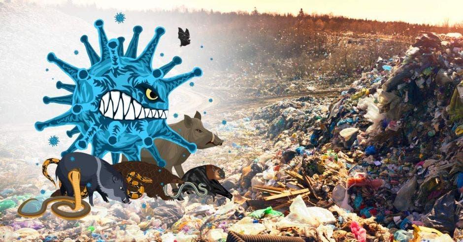 Distintos animales caminan sobre una montaña de basura.