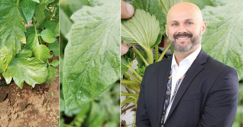 un hombre calvo de barba sobre un fondo de vegetales