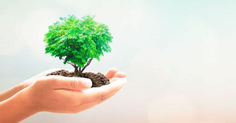 una mano sostiene un árbol miniatura