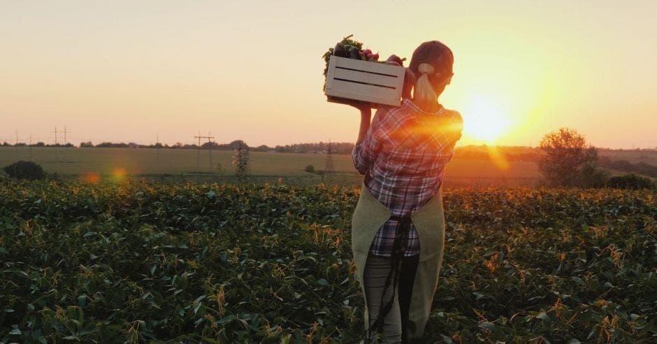 una mujer carga un caja con vegetales durante una mañana soleada
