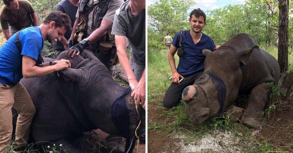 Veterinario con rinoceronte