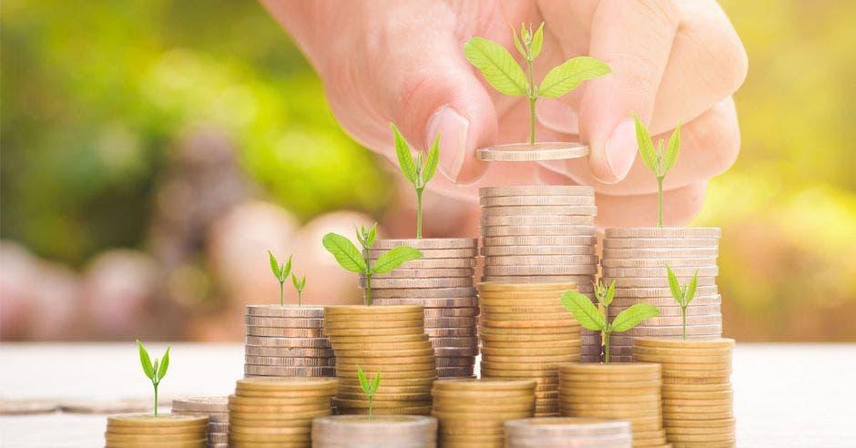 plantas pequeñas sobre torres de monedas de diferentes tamaños y una mano sosteniendo una de las monedas