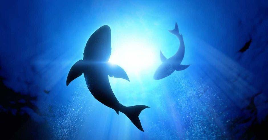 dos tiburones nadan en las profundidades