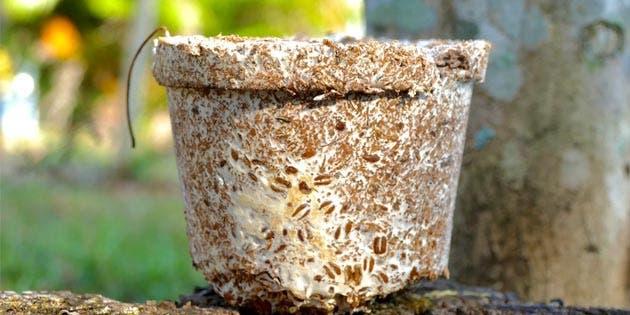 una maceta con semillas decorativas