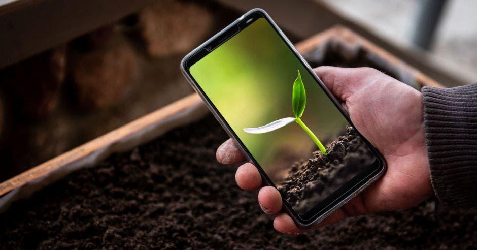 un hombre con un celular verifica el crecimiento de una planta