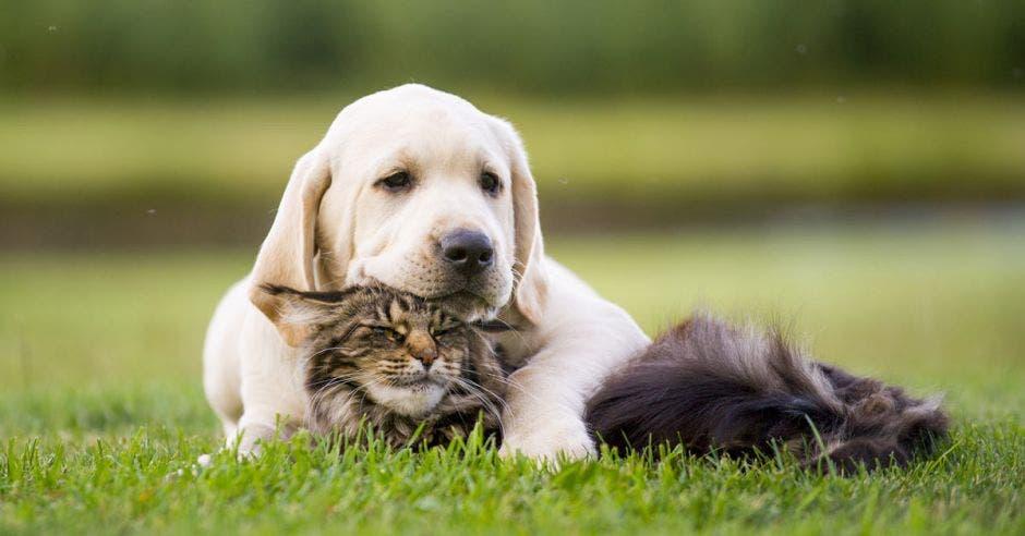 un perro y un gato acostados en el césped