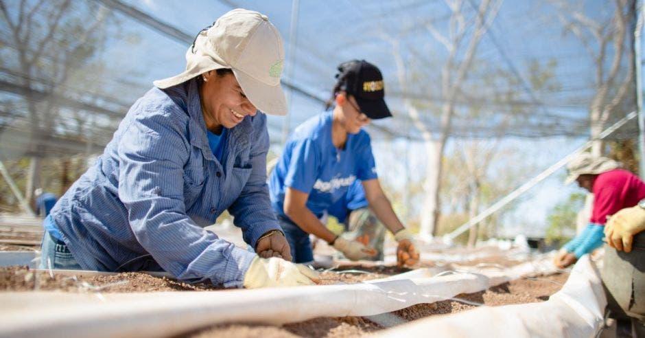 Mujeres trabajando en huerta