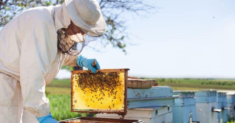 un hombre recolecta miel de su apiario