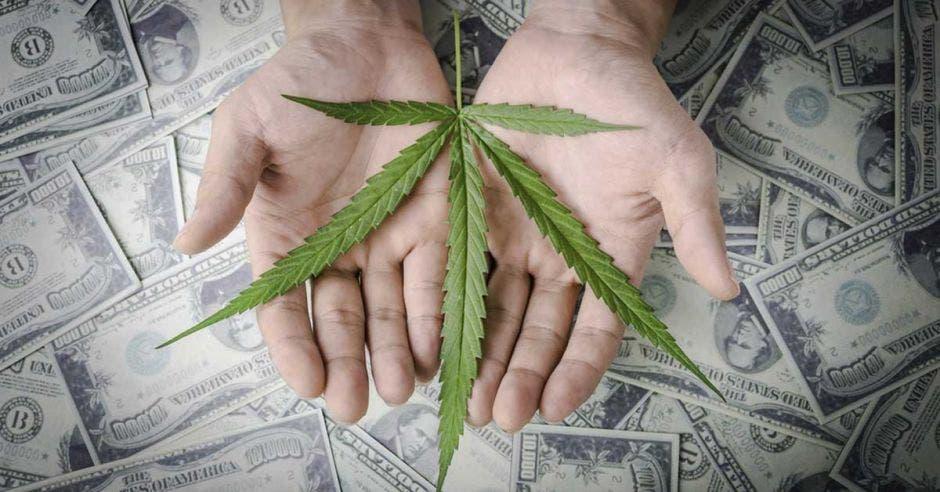una planta de cannabis sobre un fondo de billetes