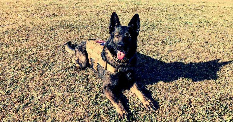 La oficial canina Alcalá echada en el césped