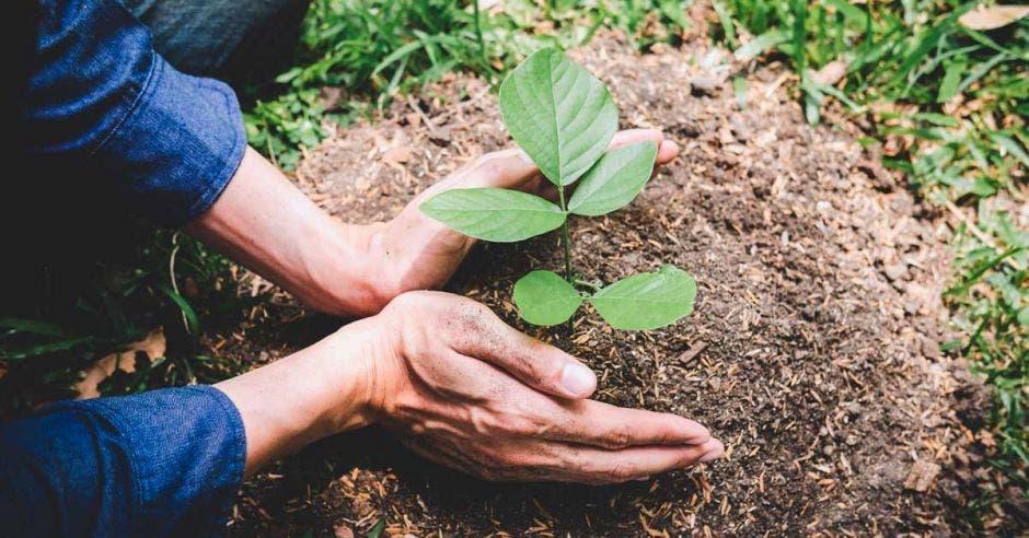 Manos de jóvenes plantaban los semilleros y árboles en tierra