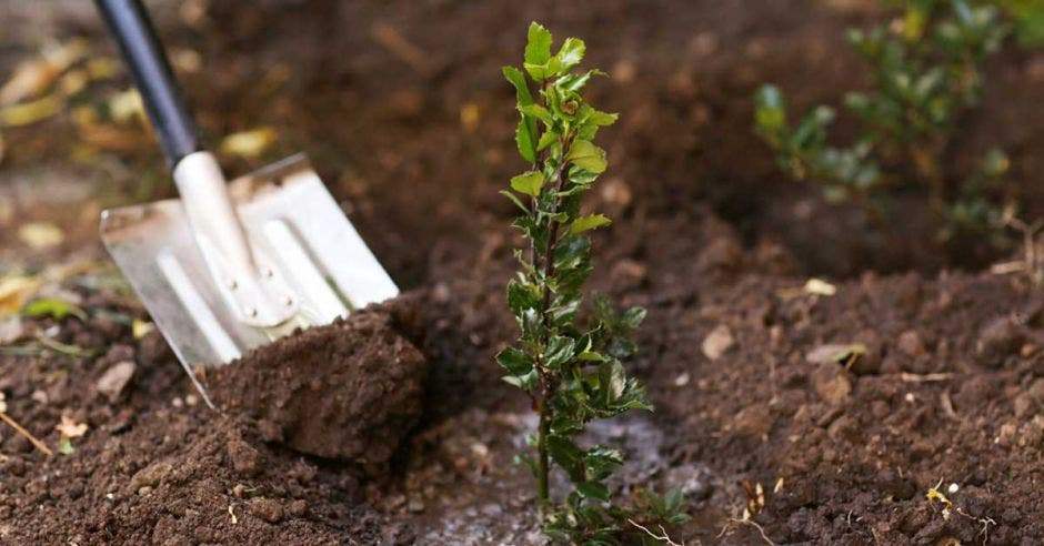 un árbol plantado junto a una pala de metal