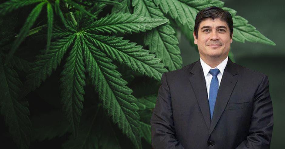 un hombre de saco y corbata sobre un fondo de plantas de marihuana