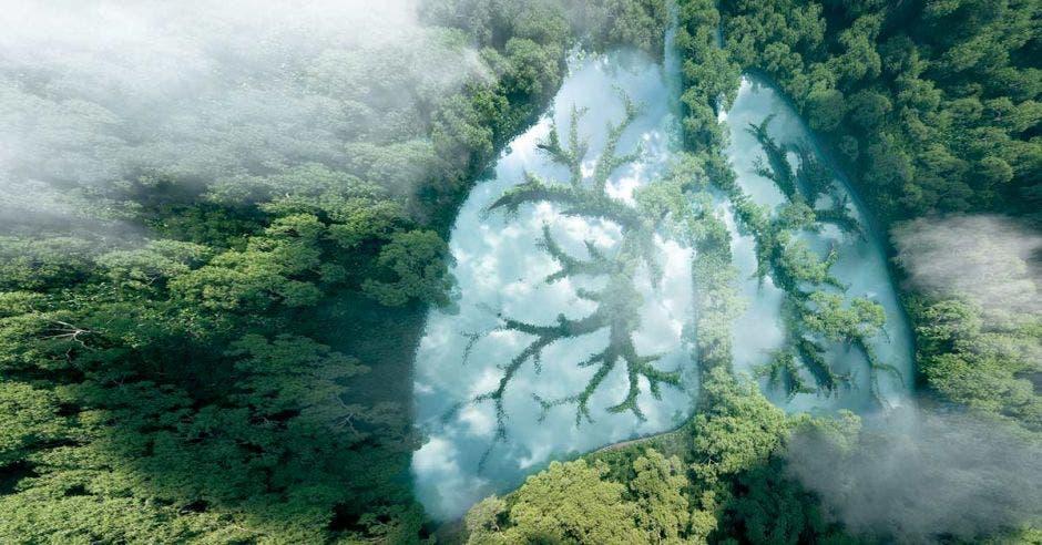un bosque con una nube en forma de pulmón en el centro