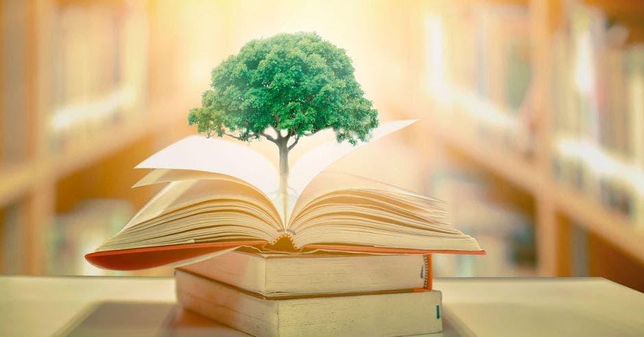 árbol pequeño en medio de un libro abierto