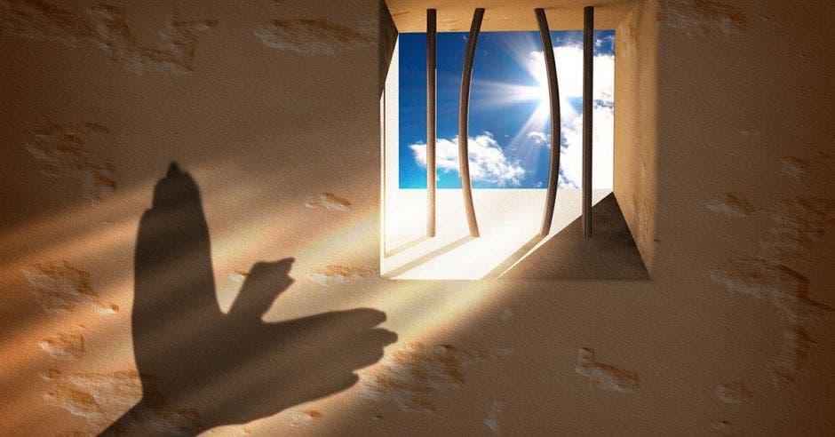 manos contra luz haciendo forma de paloma en la pared de una celda